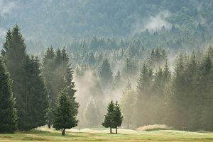 La foresta del Cansiglio